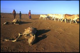 Urgent Drought Appeal For Ogaden